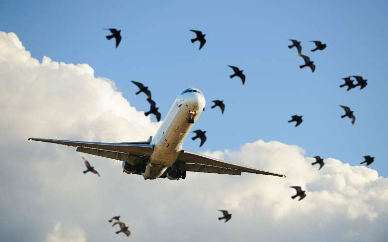 Iranian plane makes emergency landing after hitting bird